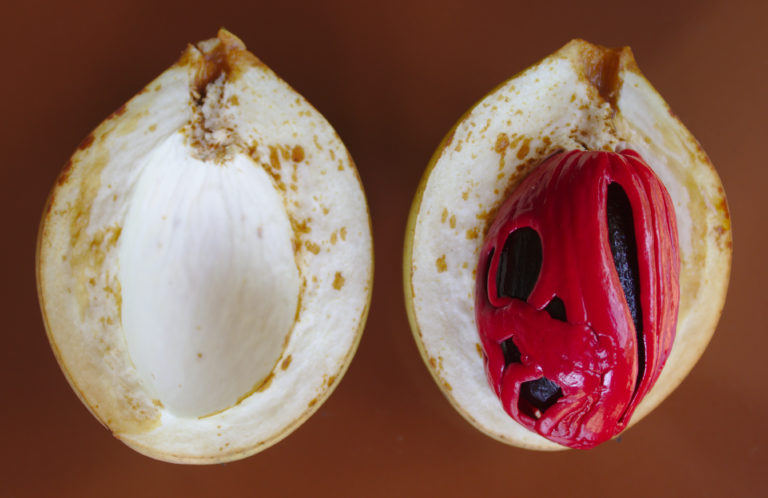 Nutmeg fruit seed and aril 768x498 1